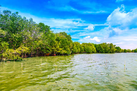 southern thailand: mangrove forest with cloudy blue sky, Environment of southern Thailand Stock Photo