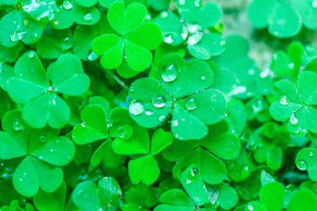 the freshness: Green leaves natural background, freshness