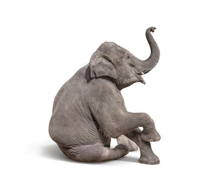 jonge baby olifant zitten op een witte achtergrond te laten zien