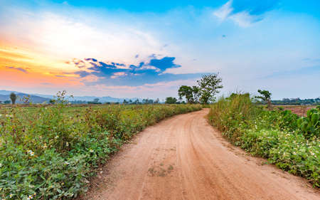beautiful sunset at countryside landscape with rural road and agriculture field in harvest season of thailand