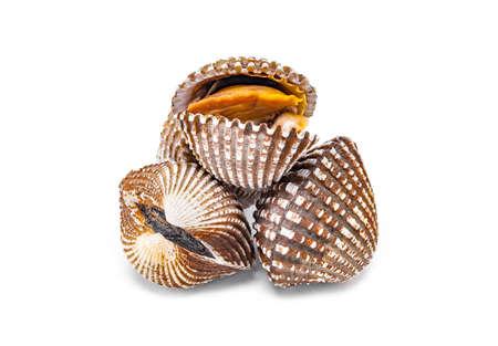 ridged: Cardiidae shellfish seafood isolated on white background Stock Photo