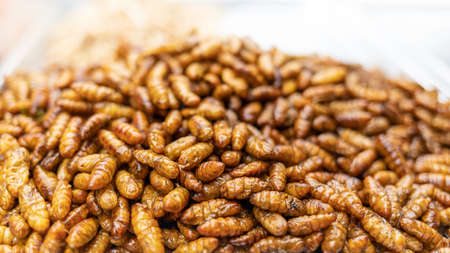 crispy silkworm it is thai organic alternative snack and high protein food
