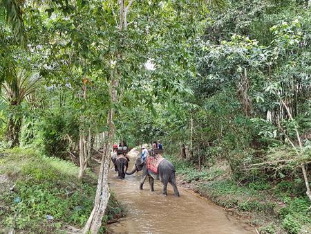 Elephants transport people in th jungle