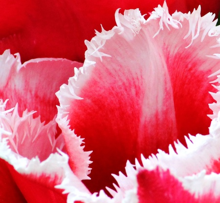 jagged: Pink   White Jagged Flower Stock Photo