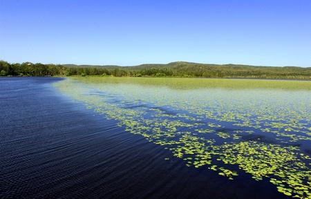 Noosa Everglades photo