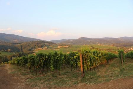 fertile frond: Italy Vineyards Stock Photo