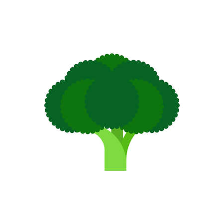 Fresh broccoli vegetable illustration