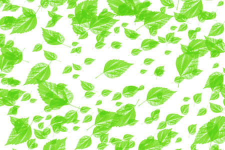 Numerous green leaves on white background Stock Photo - 2689141
