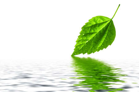 Green leaf reflecting in nice and clear water photo