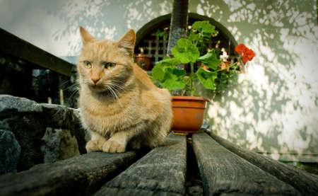 Image of cute cat in beautiful rustic place photo
