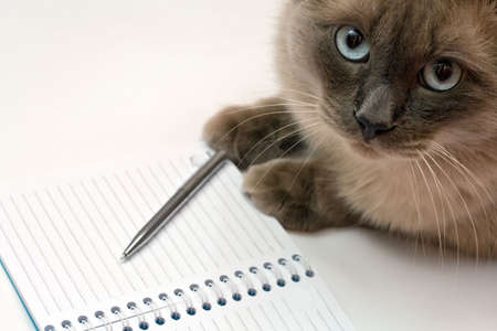 Funny business concept - cat, pen and blank open notepad photo