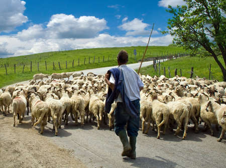 Shepherd with his sheep herd, in a romanian village photo