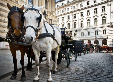 vienna: Horse-driven carriage at Hofburg palace, Vienna, Austria