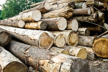 numerous: Deforestation concept: stack of numerous chopped trees Stock Photo