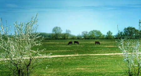 Rural view of serene grassland with three pasture cows Stock Photo - 3873262