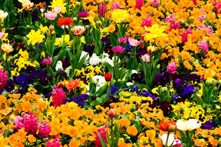 Garden with colorful beautiful flowers Stock Photo - 4017196