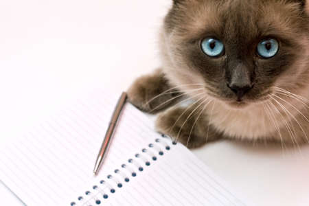 copy writing: Funny cat in front of blank notebook Stock Photo