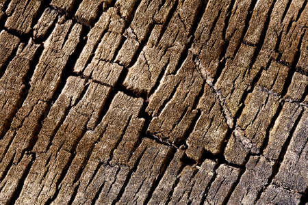 Texture background - macro view of tree cracked bark photo