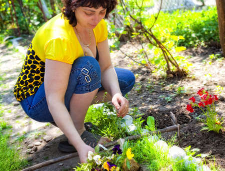Gardening - mature woman planting flowers in backyard garden Stock Photo - 5107820