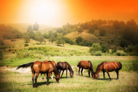 Wild horses on green field and sunny orange sky