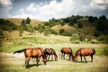 Horses on green rural landscape