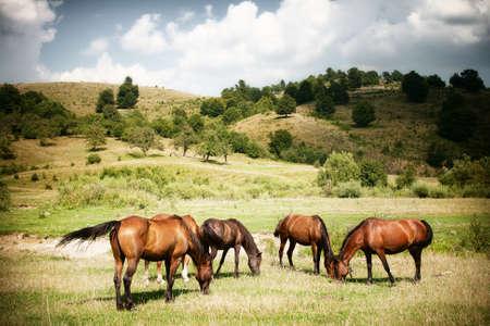 Pferde auf der grünen Landschaft im ländlichen Raum Standard-Bild
