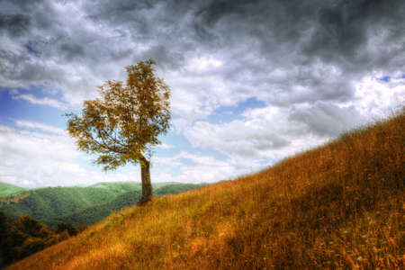 Mountain landscape - isolated tree, autumn grass and cloudy sky Stock Photo - 12865878