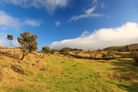 blue cloudy sky: Azores landscape – grass, trees and blue cloudy sky Stock Photo