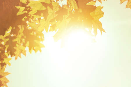 Autumn leaves background over bright sun