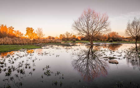 Reflections of tree without branches in wetland near Guadiana river in dusk Banco de Imagens - 102345878