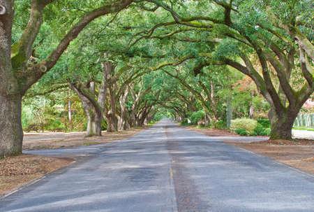 에이컨, 사우스 캐롤라이나에있는 오크 라인 사우스 경계 드라이브의 생활 아치. 스톡 콘텐츠