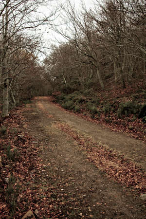 A path in the middle of the forest in autumn