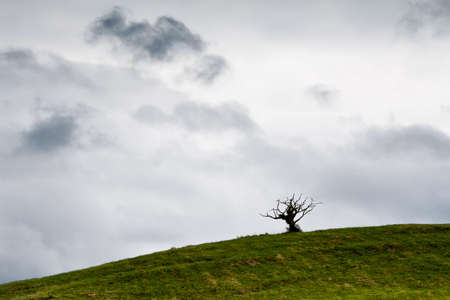 Lonely green tree in field Stock Photo - 14606599