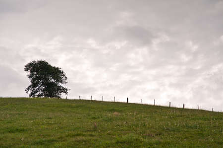 Lonely green tree in field Stock Photo - 14606714
