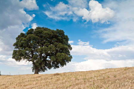 Lonely green tree in field Stock Photo - 14606837