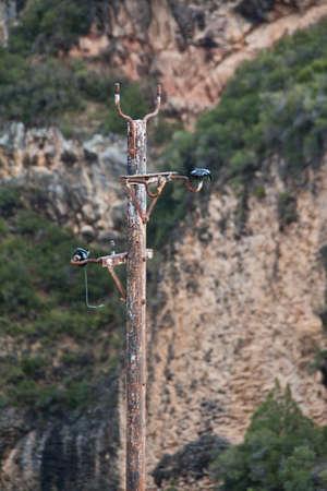 Antique telephone pole with glass insulators in Alquezar (Spain) photo