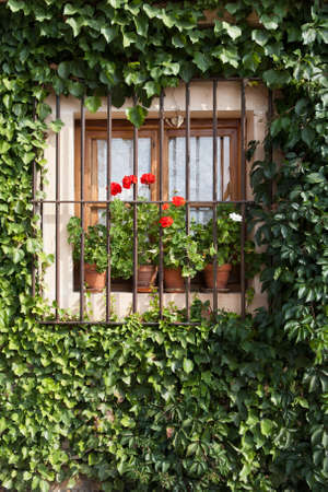 An old flowery window in Pedraza, Segovia (Spain) photo
