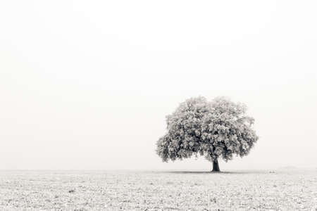 A lonely and cold tree during the winter