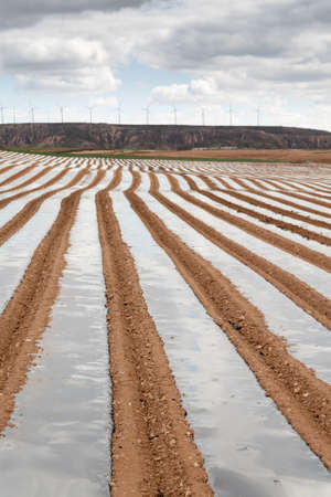 White asparagus field with a wind farm as background in Tudela, Navarra  Spain  Stock Photo