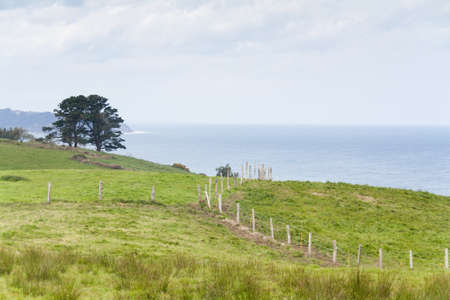 Fences and trees by the sea and cloudy sky in green meadow in Asturias, Spain