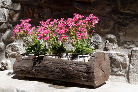 Wooden planter on a stone bench Stock Photo