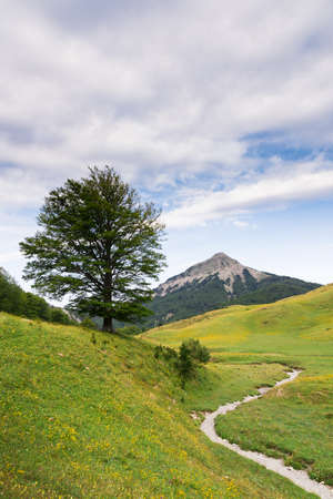 A tree, a mountain and a dry river in Zurizas Valley, Spanish Pirineos Stock Photo