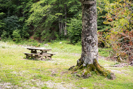 Bench in the forest, Linza, Huesca (Spain)