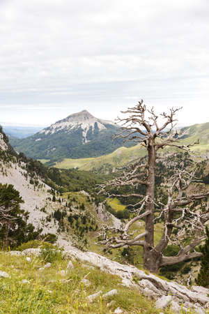 Dead tree and mountain in Zurizas Valley, Spanish Pirineos