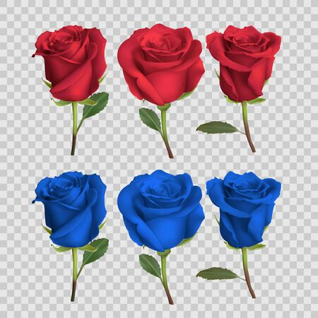 realistic rose design isolated on background, vector illustration 向量圖像