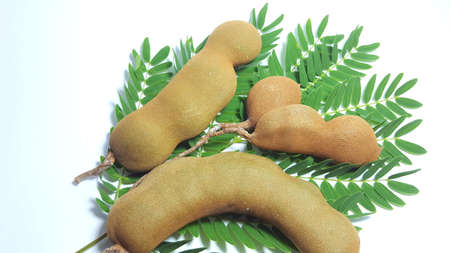 Tamarind fruit, one of the fruit with sour taste which is usually used as a spice in traditional Indonesian cuisine