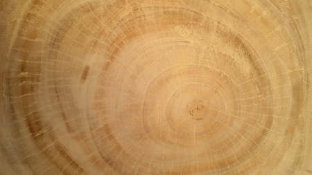 Natural wood texture, indicates the age of wood. Suitable for use as educational material or background images