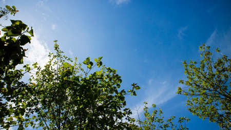 Green scenery with trees and blue sky background with beautiful clouds