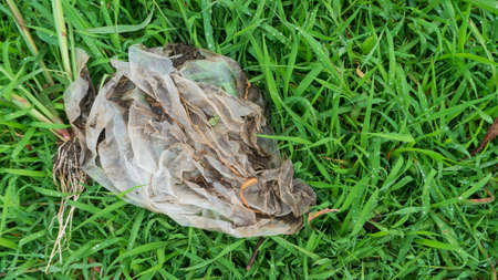 plastic waste on green grass, one of the environmental pollutants that needs special attention 版權商用圖片