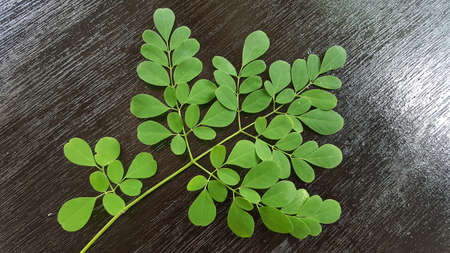 Moringa oleifera is a plant that is often called the drumstick tree, the miracle tree, the ben oil tree, or the horseradish tree.
